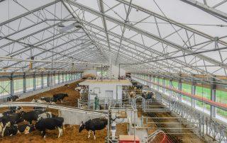 Agriculture de vache dans un Permodome