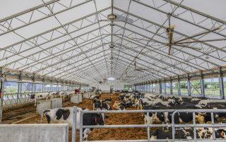 Étable de vaches faite d'un Permodome